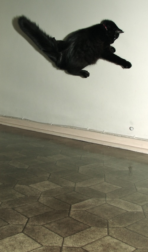 pepita ninja